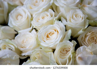 Rose Blanche Stock Photos Nature Images Shutterstock
