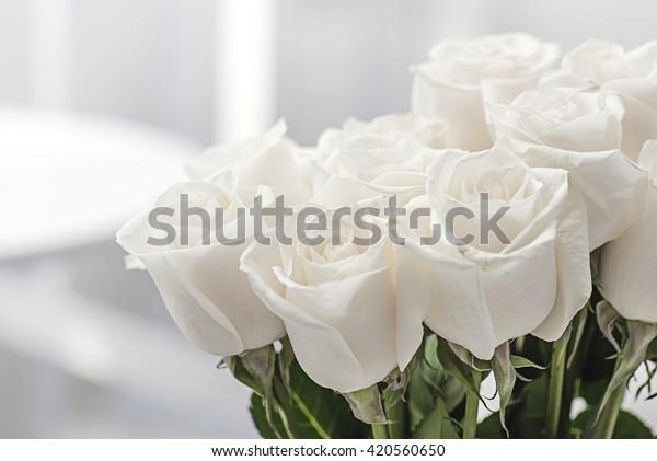 белые розы крупным планом