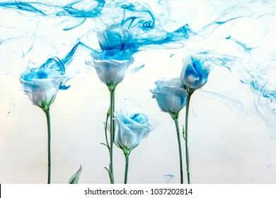White roses inside in water on a white background. Flowers  under the water with acrylic blue paints.