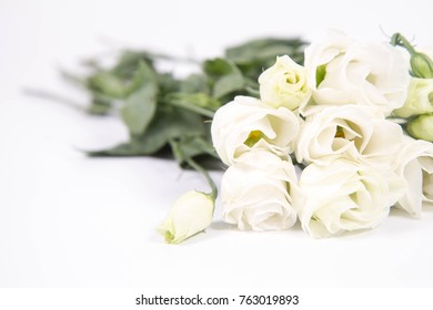 White roses on a white background