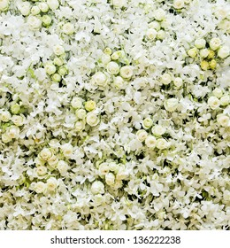 White roses and white orchids background