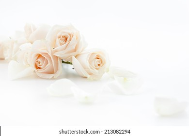 white roses and petals lying down on a white surface. Selective focus.