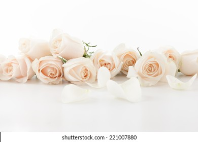 White Roses and petals lying down on white background.