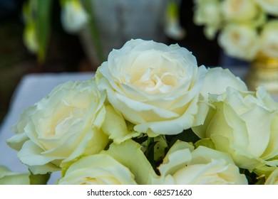 White Roses, Thailand.