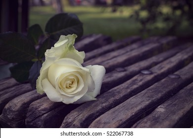 white roze on the wood banch,vintage effect