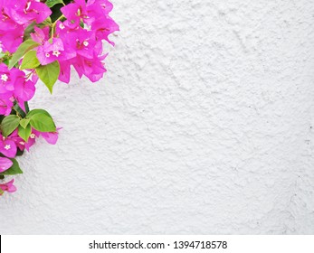 White rugged concrete background with pink flowers in one corner.