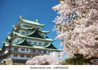 white sakura or cherry blossom full bloom  with Nagoya Castle background in spring season against blue sky, Japan. Famous travel landmark in Aichi, Chubu.