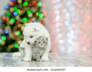 White samoyed puppy embracing a kitten on a background of the Christmas tree. Empty space for text