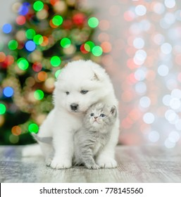 White samoyed puppy embracing a kitten on a background of the Christmas tree