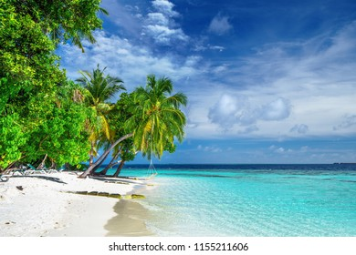 White sand beach with coconut palm trees