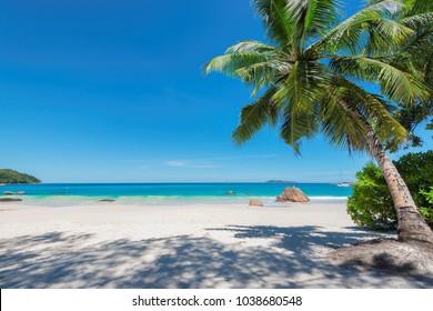 White sand beach with turquoise water, granite rocks and palm trees. Anse Lazio beach at Praslin island, Seychelles.