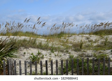 White sand dunes at the beach by a rustic fence with sea grass waving against a background of sunny blue sky