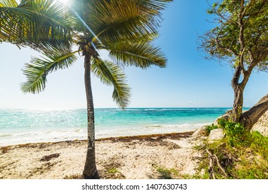 White sand and palm trees in Raisins Clairs in Guadeloupe, French west indies. Lesser Antilles, Caribbean sea