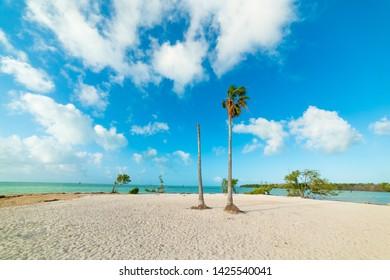 White sand and palm trees in Sombrero Beach. Florida Keys, USA