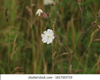 white Sandman, resin, field flower