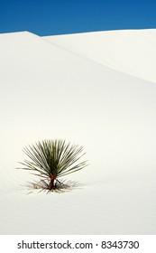 White Sands National Park Dunes
