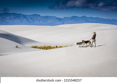 White Sands, NM / USA - 11-15-2014: A blonde-haired woman photographer walks two German Shepards on the gypsum dunes at White Sands National Monument in New Mexico.