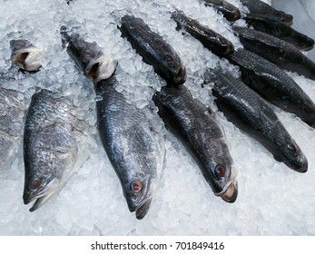 White Sea Bass Fish on Ice in Market for sale, ready for cooking
