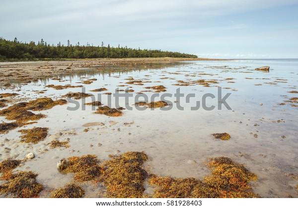 White Sea coast falls asleep fucus