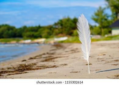 White seagull feather on the beach. Estonia