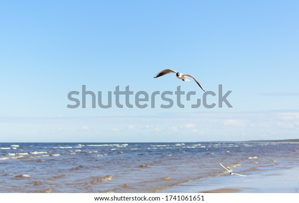 white-seagull-flying-above-water-600w-17