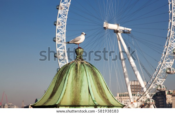white seagull on a sunny summer day in London, UK