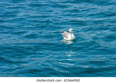 The white sea-gull sitting in blue water summer nice background
