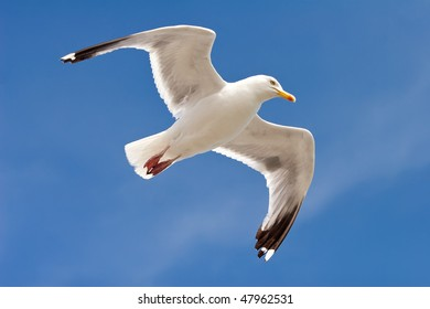 White seagull with spread wings against the clear blue sky