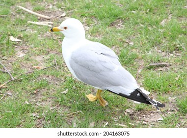 White seagull standing on green grass