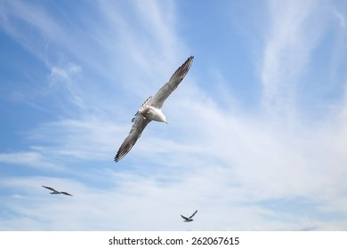 White seagulls flying on blue cloudy sky background