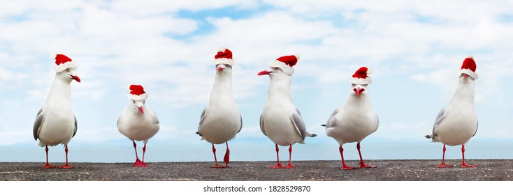 White Seagulls in red christmas hats funny xmas banner - high resolution