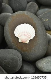 White seaShell on pebbles background