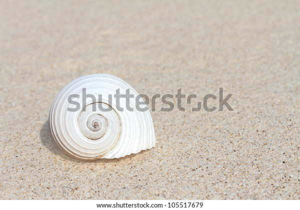 White seashell on sand with copy space