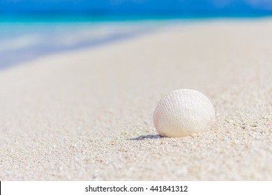 White seashell in the sand on the beach