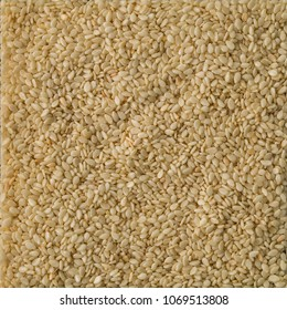 White sesame seed background and textured. Top view. Organic food, healthy lifestyle, space for text