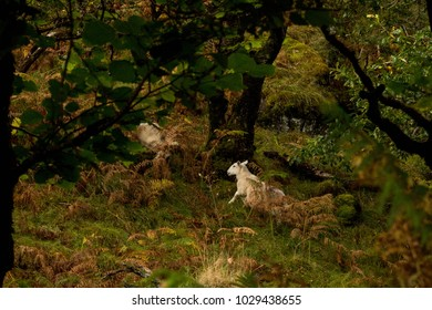 White Sheep in Green Mystery Forest