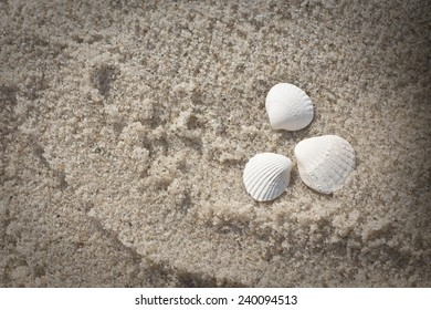 white shell in beige sand