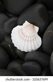 white shell on wet pebble, natural background
