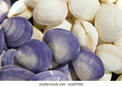 white shell with violet in the exhibition shows city Huahin shellfish , Thailand ,