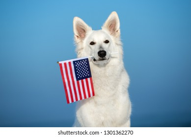 white shepherd dog holding an american flag in mouth