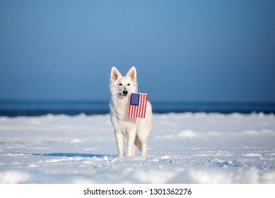 white shepherd dog holding an american flag outdoors in winter