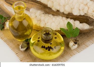 White silk cotton tree, Ceiba, Kapok, Java cotton, Javax kapok, Silk cotton, Seeds and oil liquid