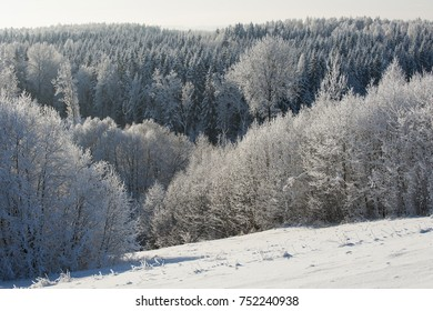 White silver snow ice and frost on forest trees in cold bright sunny winter morning light