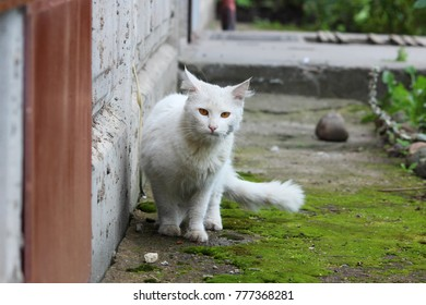 white single homeless cat with orange eyes is posing outdoors on a sunny day.