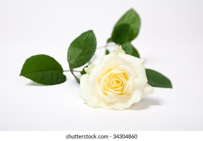 White  single rose isolated on white with green leaves