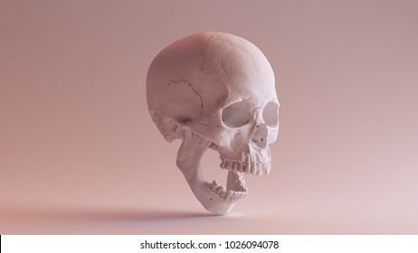 White Skull with Jaw Open 3Q Right 3d illustration skull scan scsuvizlab CC Attribution