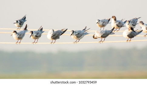 White small birds sitting on electric cable