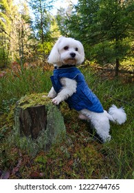 white small dog in the forest