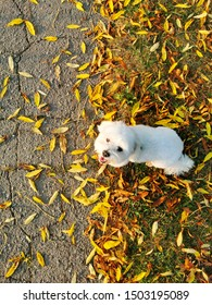 white small dog sitting in leaves
