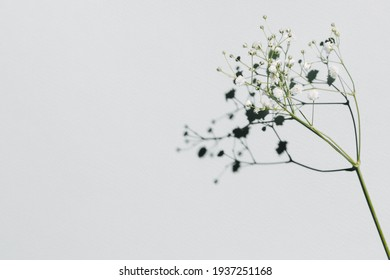 White small flowers over pastel blue background with trendy shadow and sunlight. Minimal summer template with copy space. Flat lay, top view